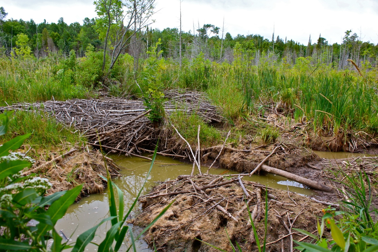 Beaver Dam, Courtesy of P. Zaks